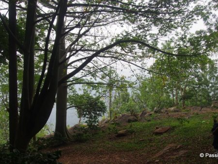 Water Rock Bungalow – An Offbeat Place To Stay In Yercaud