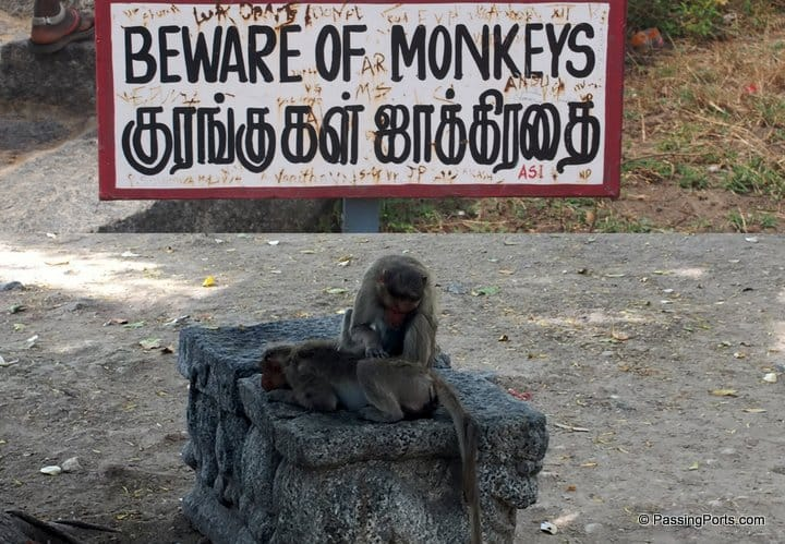 Monkeys inside Gingee Fort