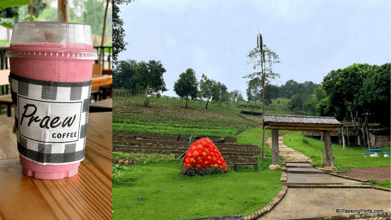 Strawberry Farm in Pai