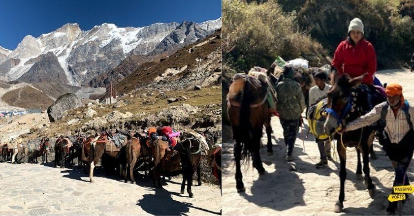 Donkeys in Kedarnath